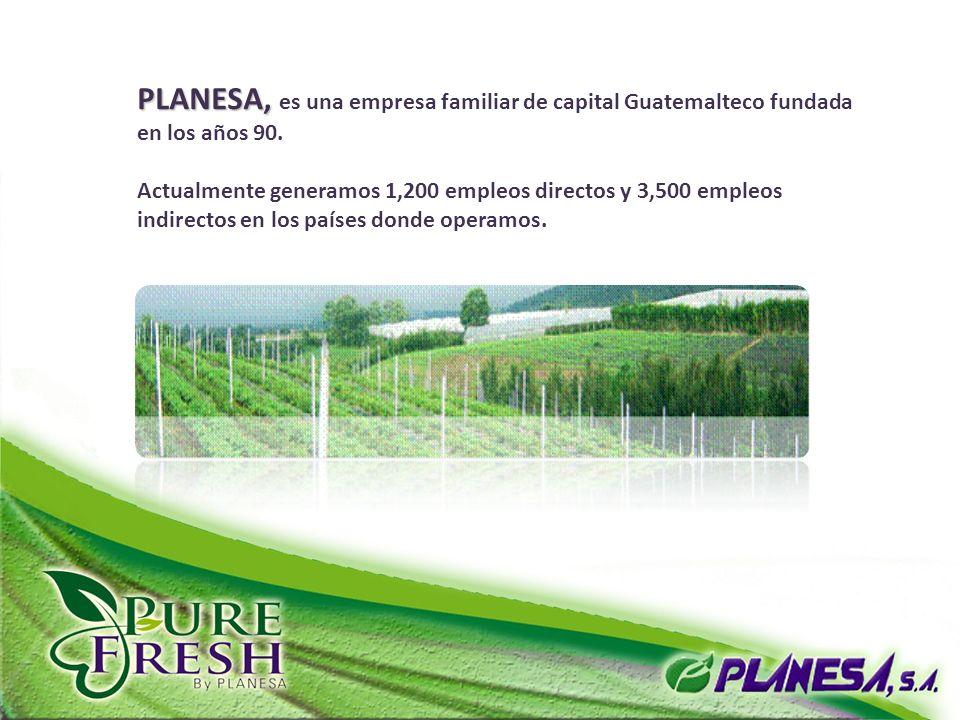 PLANESA, PLANESA, es una empresa familiar de capital Guatemalteco fundada en los años 90. Actualmente generamos 1,200 empleos directos y 3,500 empleos
