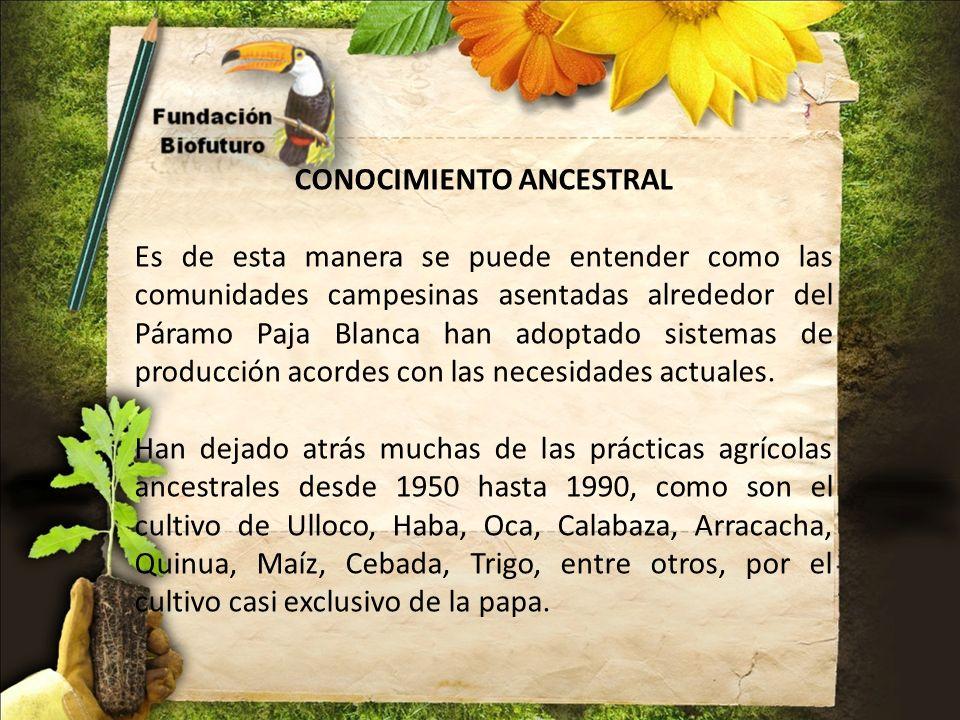 CONOCIMIENTO ANCESTRAL Es de esta manera se puede entender como las comunidades campesinas asentadas alrededor del Páramo Paja Blanca han adoptado sis