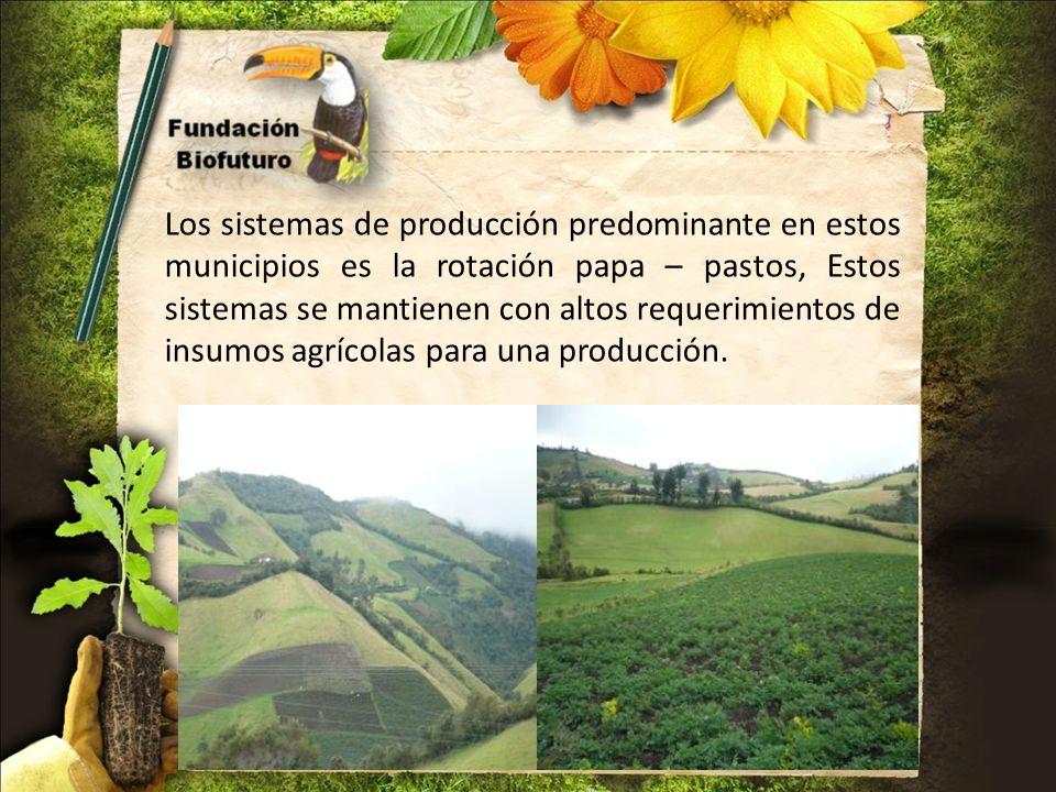 Los sistemas de producción predominante en estos municipios es la rotación papa – pastos, Estos sistemas se mantienen con altos requerimientos de insu