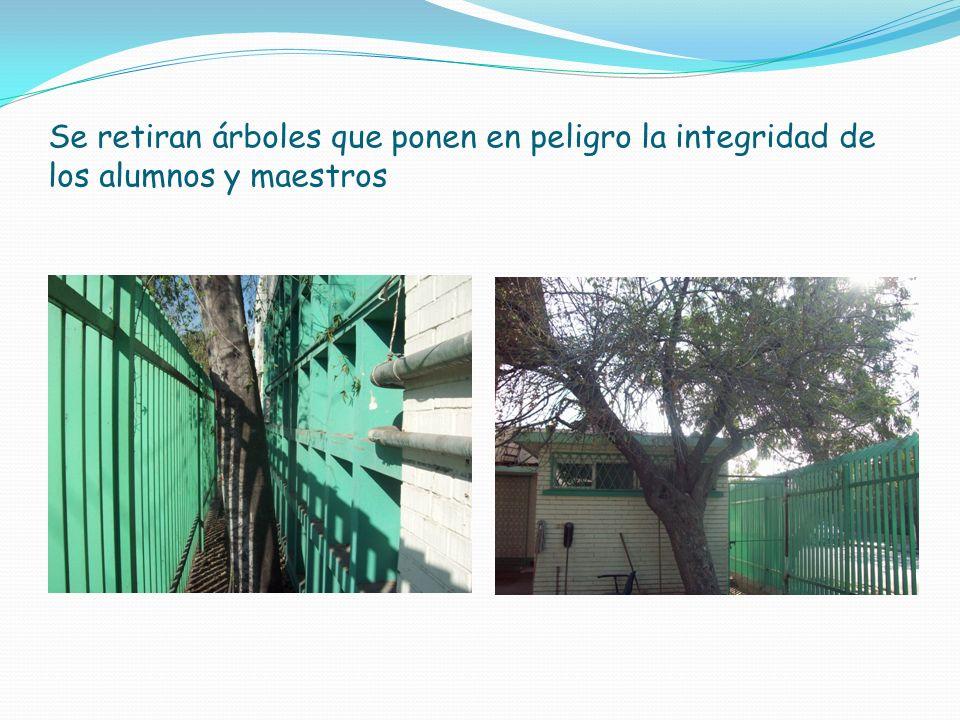 Se retiran árboles que ponen en peligro la integridad de los alumnos y maestros