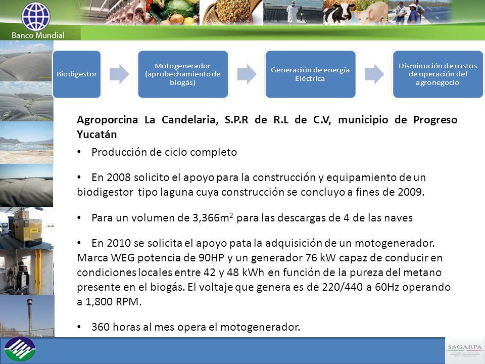 Agroporcina La Candelaria, S.P.R de R.L de C.V, municipio de Progreso Yucatán Producción de ciclo completo En 2008 solicito el apoyo para la construcc
