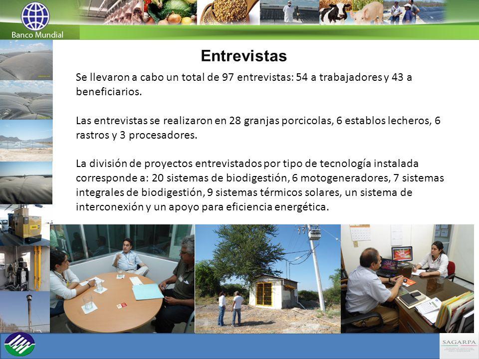 Entrevistas Se llevaron a cabo un total de 97 entrevistas: 54 a trabajadores y 43 a beneficiarios. Las entrevistas se realizaron en 28 granjas porcico