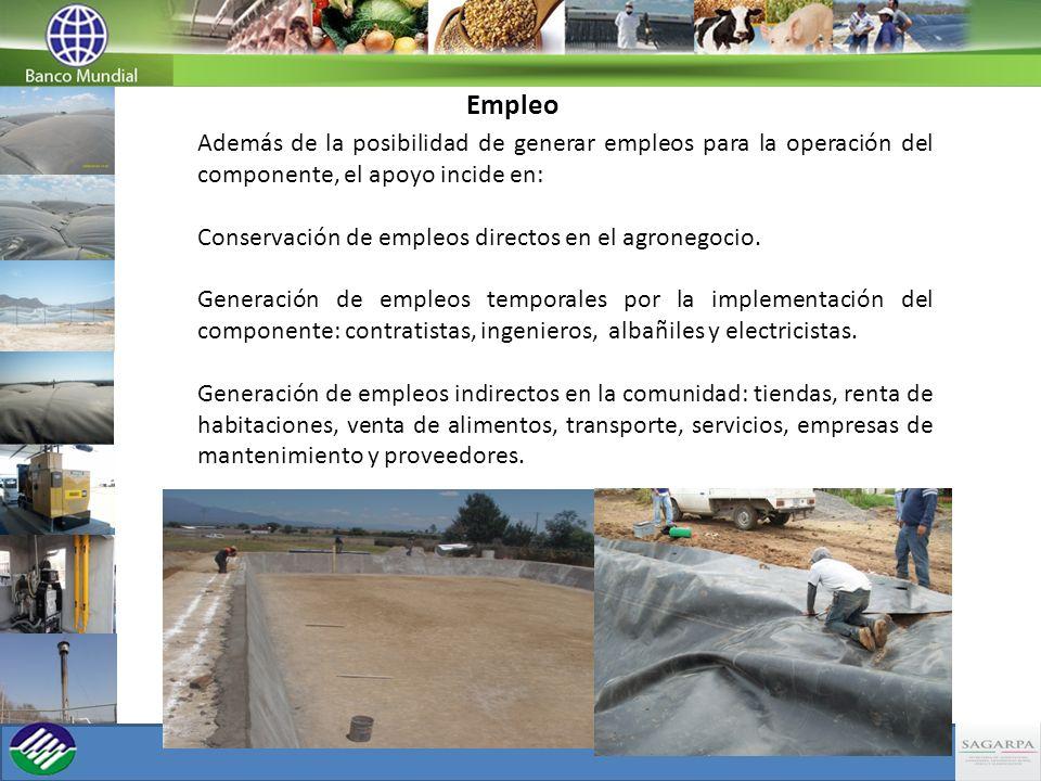 Empleo Además de la posibilidad de generar empleos para la operación del componente, el apoyo incide en: Conservación de empleos directos en el agrone