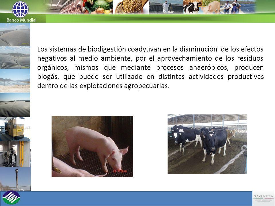 Los sistemas de biodigestión coadyuvan en la disminución de los efectos negativos al medio ambiente, por el aprovechamiento de los residuos orgánicos,