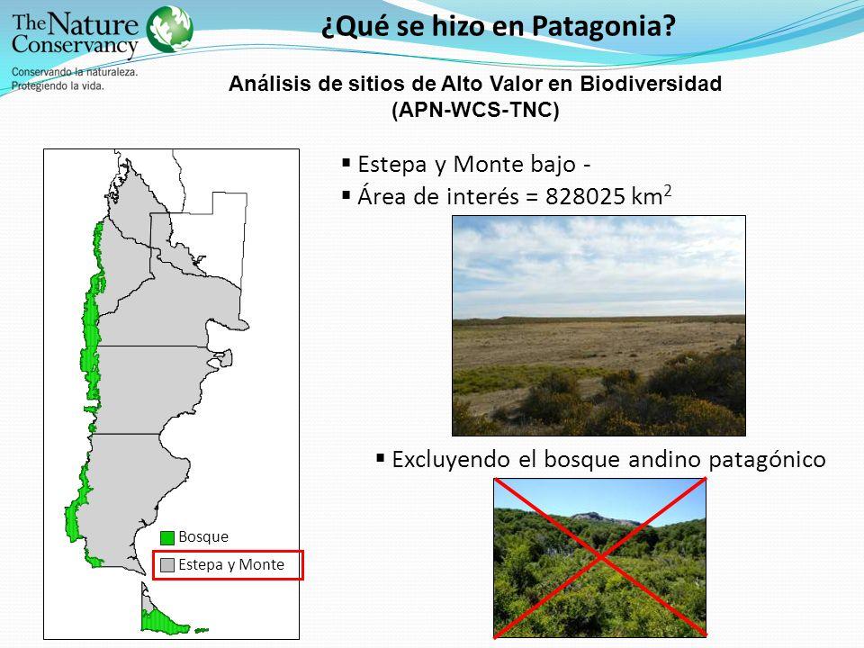 ¿Qué se hizo en Patagonia? Bosque Estepa y Monte Estepa y Monte bajo - Área de interés = 828025 km 2 Excluyendo el bosque andino patagónico Análisis d