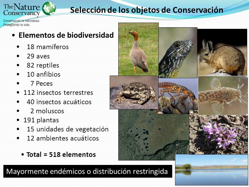 Selección de los objetos de Conservación Elementos de biodiversidad 18 mamíferos 29 aves 82 reptiles 10 anfibios 7 Peces 112 insectos terrestres 40 in