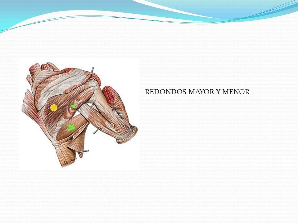 REDONDOS MAYOR Y MENOR