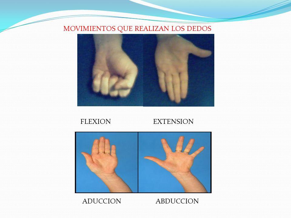 ADUCCION ABDUCCION FLEXION EXTENSION MOVIMIENTOS QUE REALIZAN LOS DEDOS