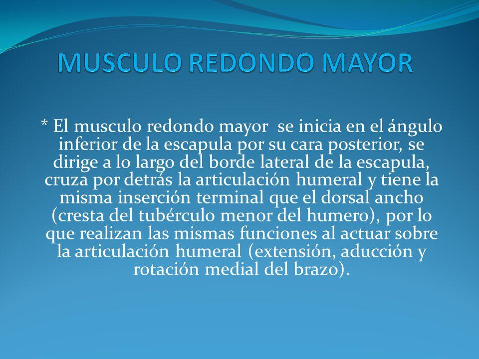 Es un musculo pequeño que se encuentra en el hombro en su parte posterior *Puede estar fusionado con el infraespinoso.