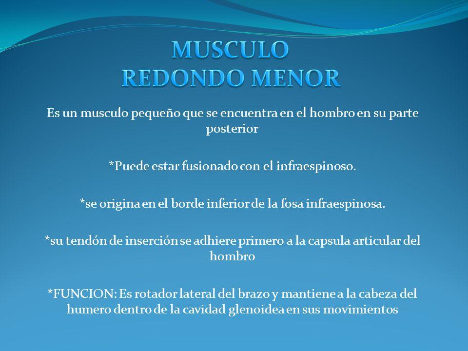 -Están situados en la región de la palma de la mano, o sea, en el dorso de la mano no se describen músculos.