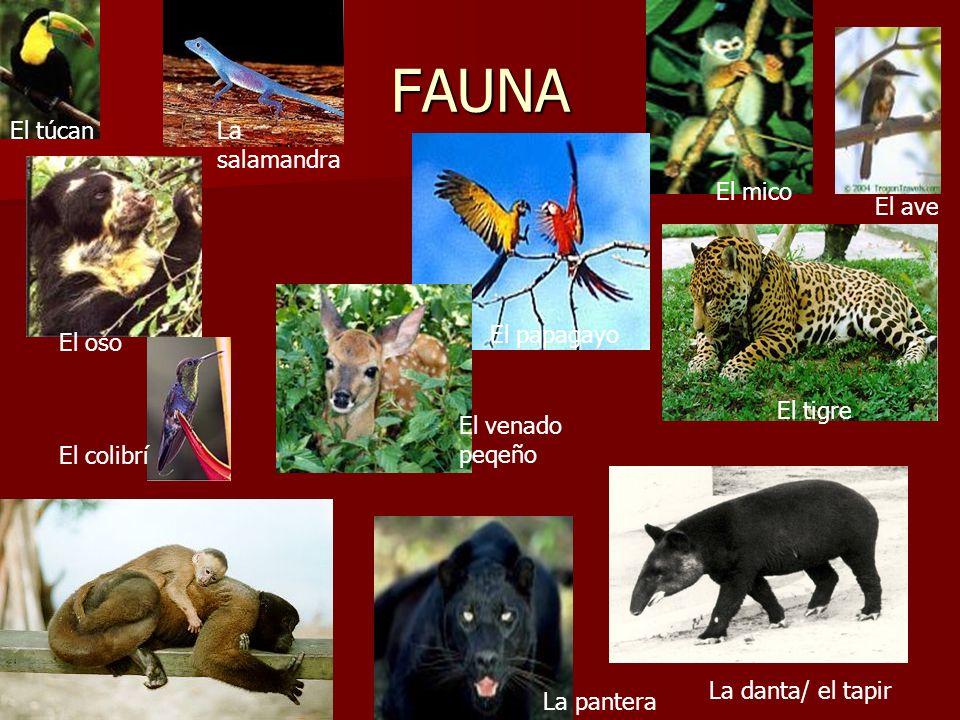 FAUNA El oso El venado peqeño El papagayo El túcanLa salamandra El mico El ave El tigre La pantera La danta/ el tapir El colibrí