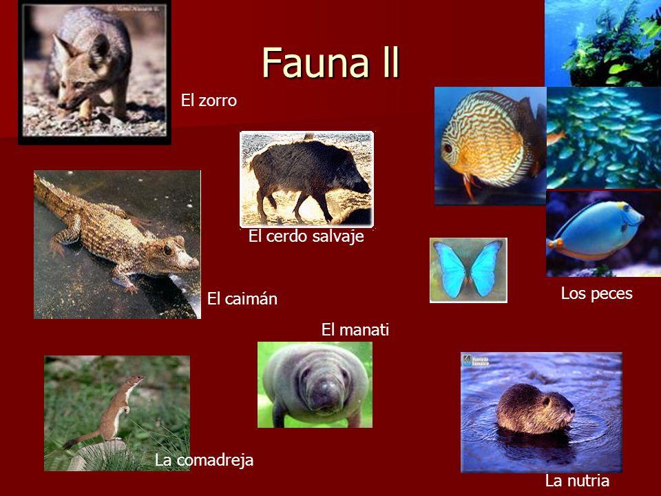 Fauna ll La comadreja El cerdo salvaje El caimán El zorro Los peces La nutria El manati