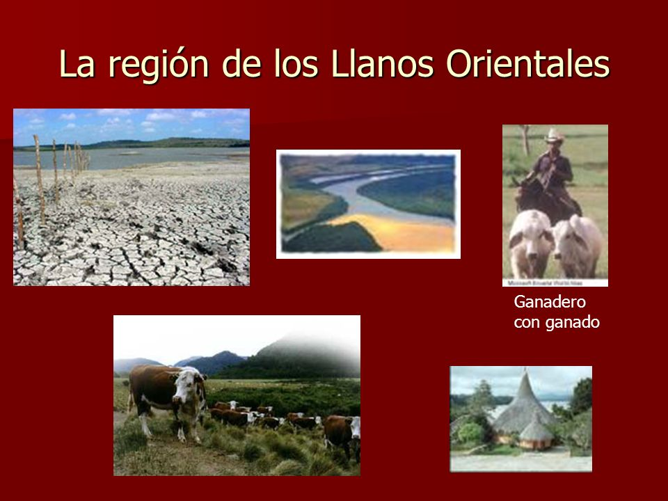 La región de los Llanos Orientales Ganadero con ganado