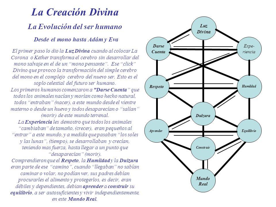 La Creación Divina La Evolución del ser humano Desde el mono hasta Adám y Eva El primer paso lo dio la Luz Divina cuando al colocar La Corona o Kether