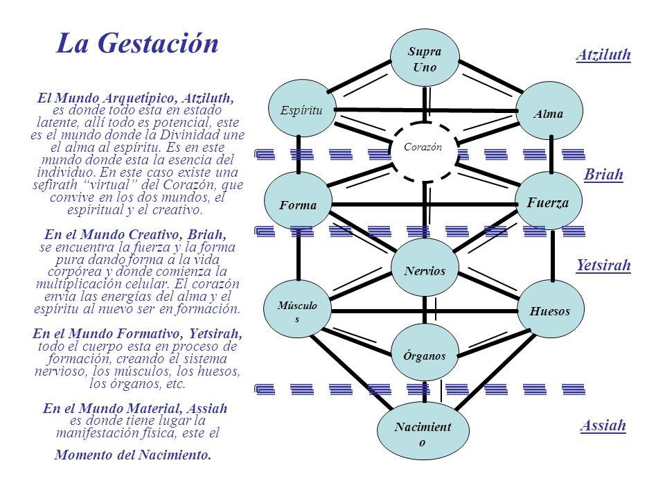 Las etapas del Crecimiento En el Mundo Material, Assiah es donde tiene lugar el nacimiento, donde el alma con la instrucción de Dios y el espíritu con la información genética se conoce a si mismo y a los que lo rodean.