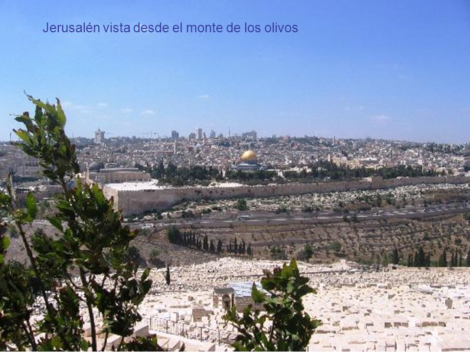 Montes de los Olivos