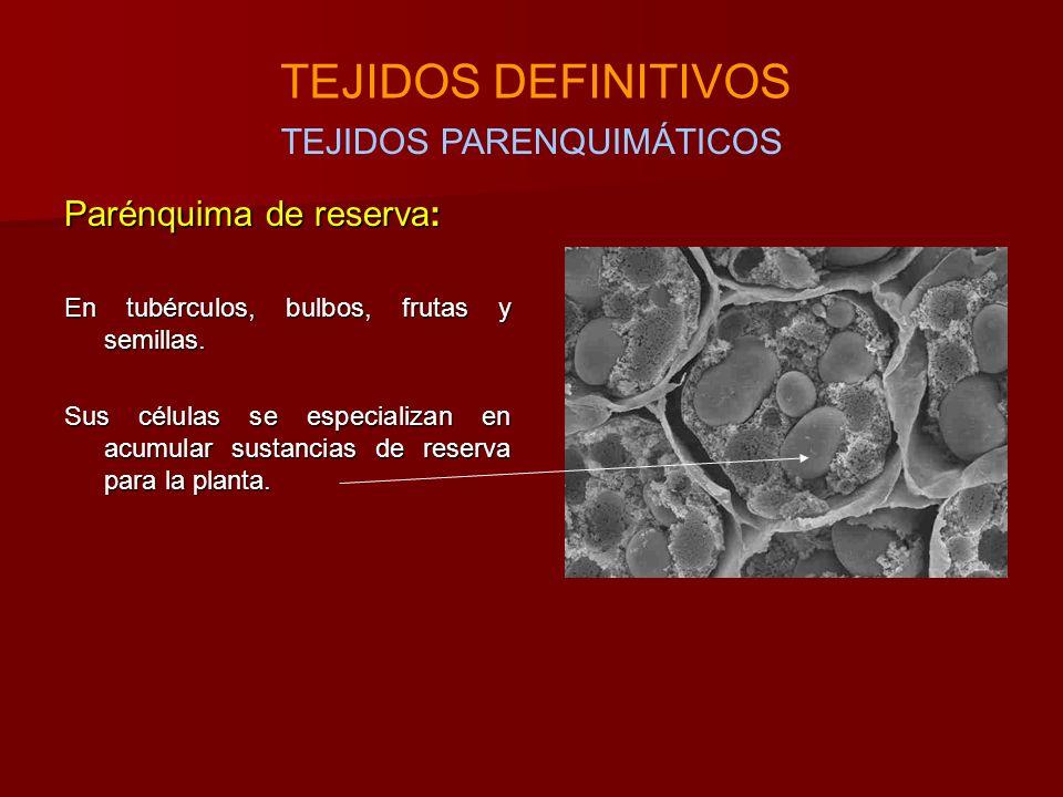 Parénquima de reserva: En tubérculos, bulbos, frutas y semillas.