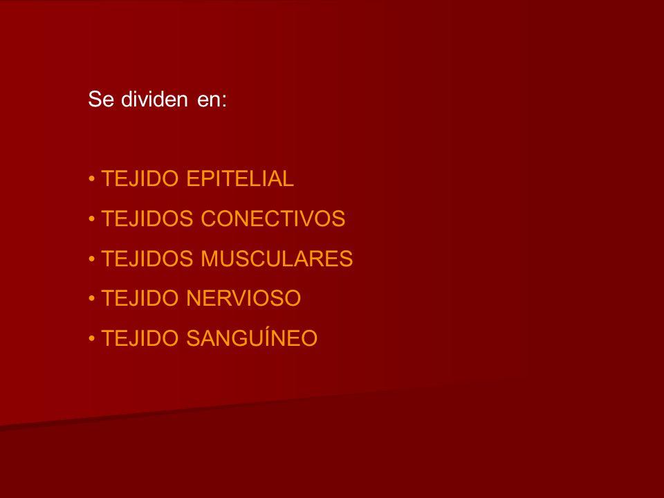 Se dividen en: TEJIDO EPITELIAL TEJIDOS CONECTIVOS TEJIDOS MUSCULARES TEJIDO NERVIOSO TEJIDO SANGUÍNEO