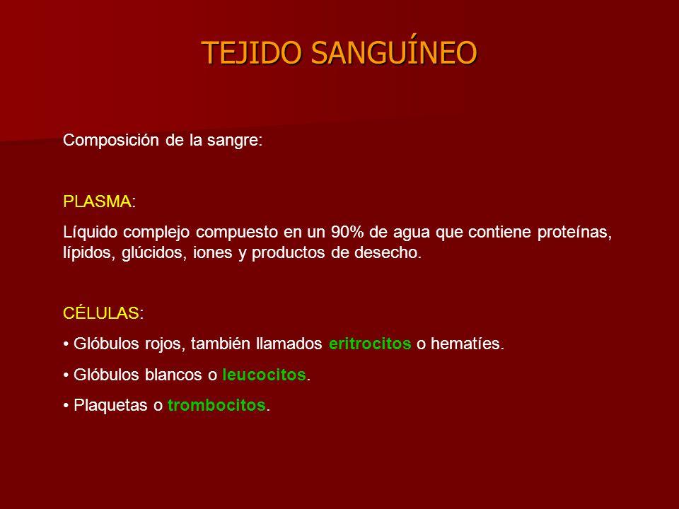 TEJIDO SANGUÍNEO Composición de la sangre: PLASMA: Líquido complejo compuesto en un 90% de agua que contiene proteínas, lípidos, glúcidos, iones y productos de desecho.