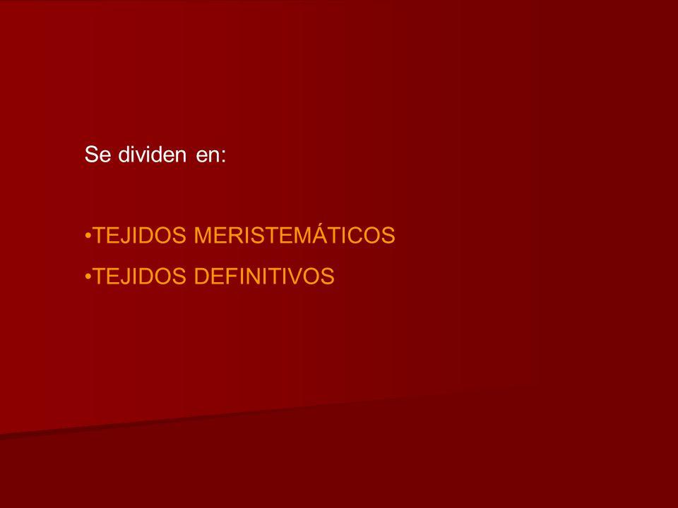 Se dividen en: TEJIDOS MERISTEMÁTICOS TEJIDOS DEFINITIVOS