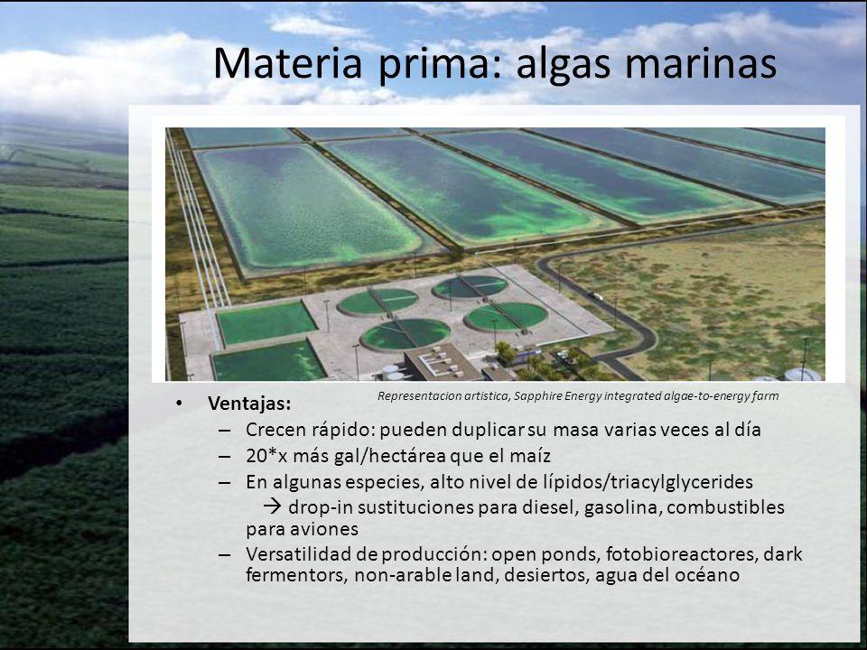 Materia prima: algas marinas Ventajas: – Crecen rápido: pueden duplicar su masa varias veces al día – 20*x más gal/hectárea que el maíz – En algunas e