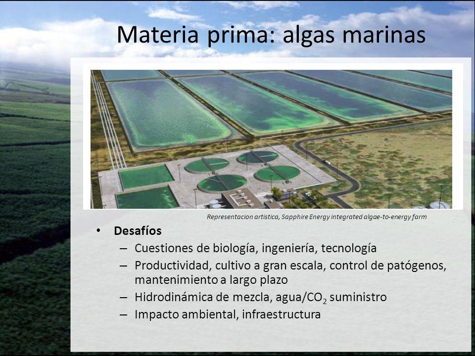 Desafíos – Cuestiones de biología, ingeniería, tecnología – Productividad, cultivo a gran escala, control de patógenos, mantenimiento a largo plazo –