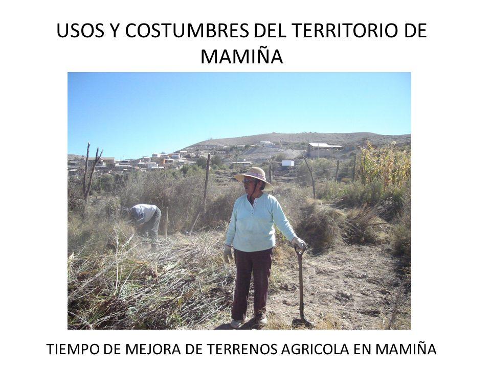 USOS Y COSTUMBRES DEL TERRITORIO DE MAMIÑA TIEMPO DE MEJORA DE TERRENOS AGRICOLA EN MAMIÑA