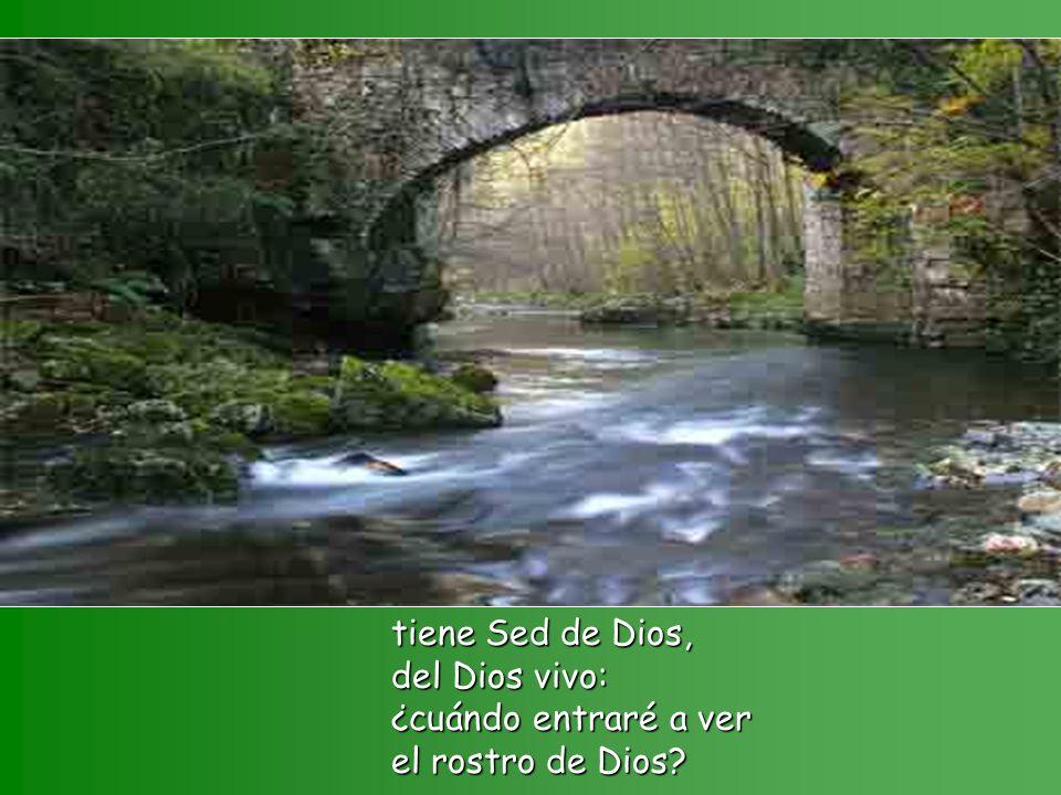Como busca la cierva corrientes de agua, así mi alma te busca a ti, Dios mío;