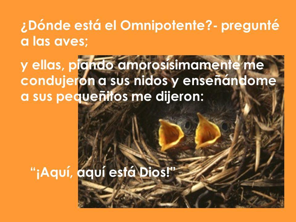 ¿Dónde está el Omnipotente?- pregunté a las aves; y ellas, piando amorosísimamente me condujeron a sus nidos y enseñándome a sus pequeñitos me dijeron