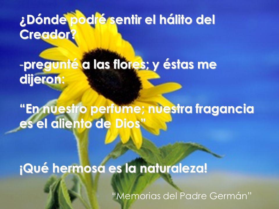 ¿Dónde podré sentir el hálito del Creador? - pregunté a las flores; y éstas me dijeron: En nuestro perfume; nuestra fragancia es el aliento de Dios ¡Q