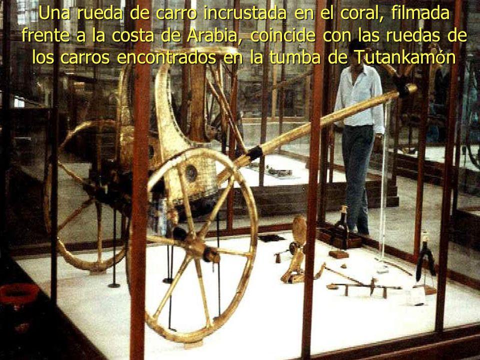 Desde 1987, Ron Wyatt ha encontrado tres ruedas doradas de carro con cuatro rayos cada una. El coral no crece en el oro y la configuraci ó n se ha man