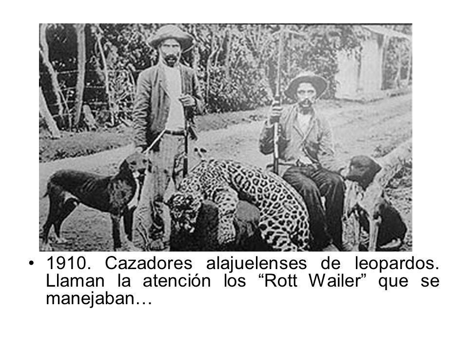 1910. Cazadores alajuelenses de leopardos. Llaman la atención los Rott Wailer que se manejaban…