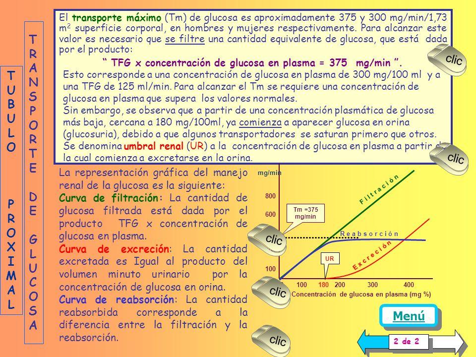 Por otra parte, la glucosa acumulada en la célula tubular sale al espacio intersticial por difusión facilitada, a favor de su gradiente de concentraci