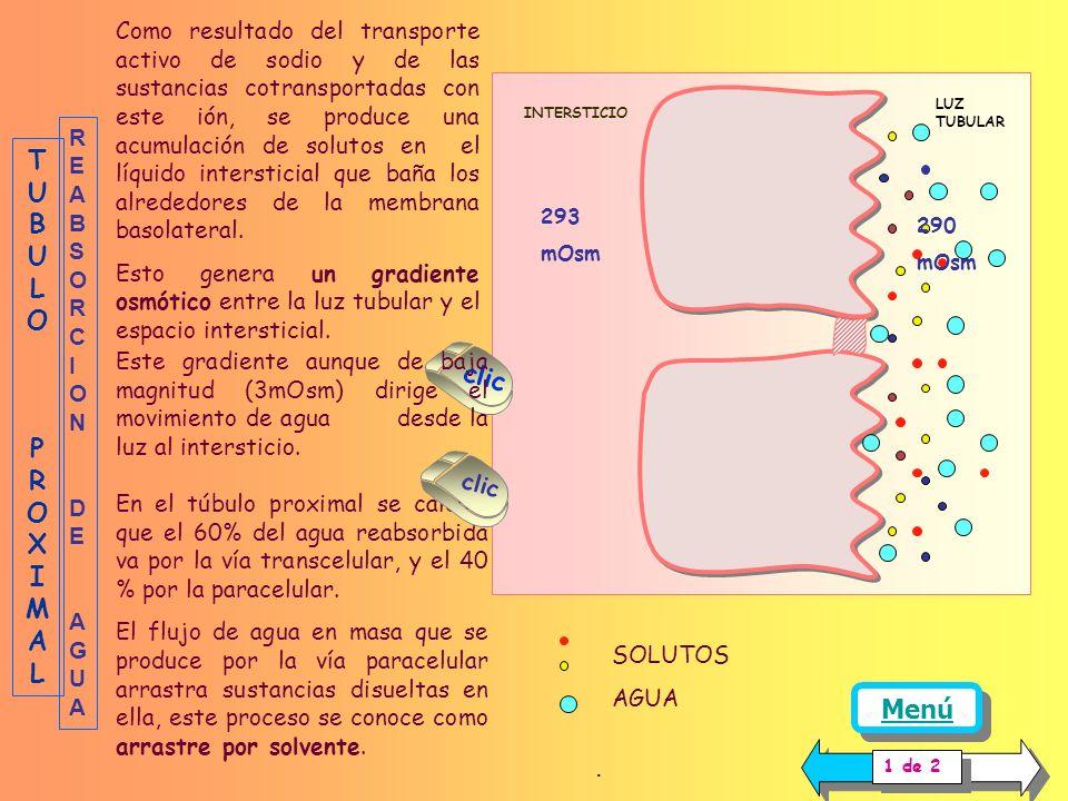 La representación gráfica del manejo renal de la glucosa es la siguiente: Curva de filtración: La cantidad de glucosa filtrada está dada por el produc