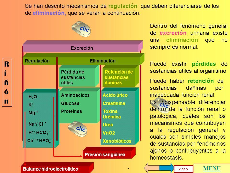 RiñónRiñón 1 de 5 MENU Regulación Eliminación H 2 O Na + / Cl - Mg ++ K + H + / HCO 3 - Ca ++ / HPO 4 - - Excreción Balance hidroelectrolítico Presión