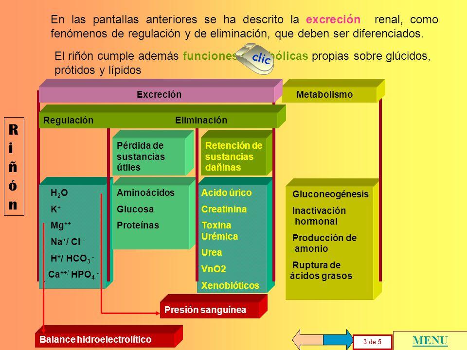 RiñónRiñón Pérdida de sustancias útiles Retención de sustancias dañinas Aminoácidos Glucosa Proteínas Acido úrico Creatinina Toxina Urémica Urea VnO2
