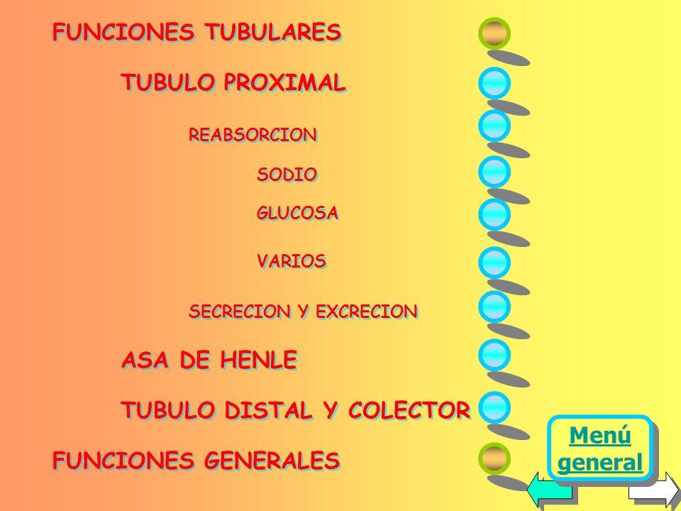 FUNCIONES TUBULARES TUBULO PROXIMAL REABSORCION SODIO GLUCOSA VARIOS SECRECION Y EXCRECION ASA DE HENLE TUBULO DISTAL Y COLECTOR FUNCIONES GENERALES FUNCIONES TUBULARES TUBULO PROXIMAL REABSORCION SODIO GLUCOSA VARIOS SECRECION Y EXCRECION ASA DE HENLE TUBULO DISTAL Y COLECTOR FUNCIONES GENERALES Menú general Menú general