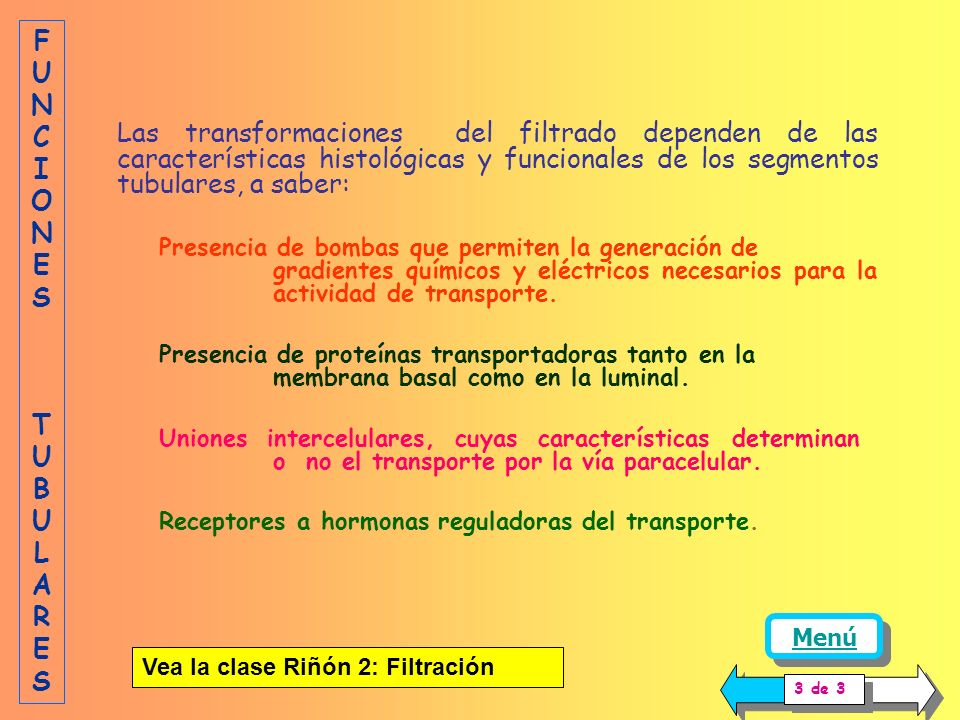 Las transformaciones del filtrado dependen de las características histológicas y funcionales de los segmentos tubulares, a saber: Presencia de bombas que permiten la generación de gradientes químicos y eléctricos necesarios para la actividad de transporte.