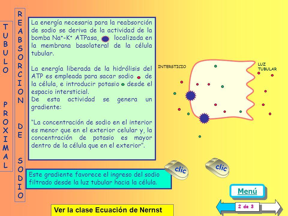 La energía necesaria para la reabsorción de sodio se deriva de la actividad de la bomba Na + -K + ATPasa, localizada en la membrana basolateral de la célula tubular.