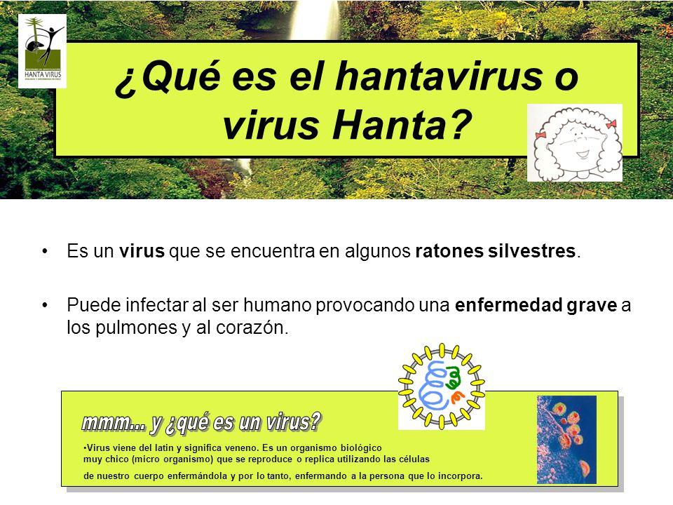 ¿Qué es el hantavirus o virus Hanta? Es un virus que se encuentra en algunos ratones silvestres. Puede infectar al ser humano provocando una enfermeda