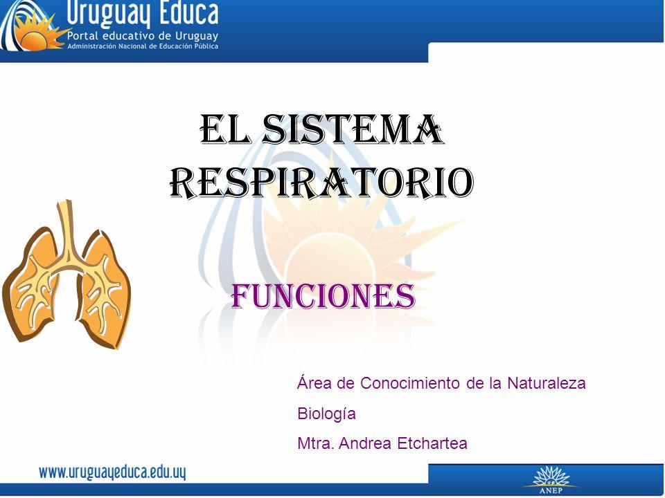 El sistema respiratorio Funciones Área de Conocimiento de la Naturaleza Biología Mtra.