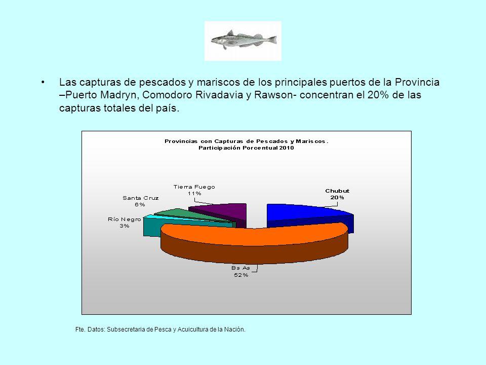 Las capturas de pescados y mariscos de los principales puertos de la Provincia –Puerto Madryn, Comodoro Rivadavia y Rawson- concentran el 20% de las c