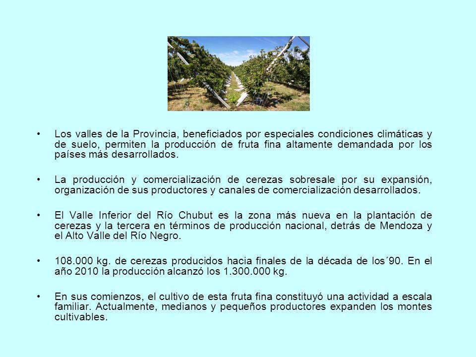 Los valles de la Provincia, beneficiados por especiales condiciones climáticas y de suelo, permiten la producción de fruta fina altamente demandada po