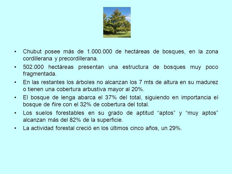 Chubut posee más de 1.000.000 de hectáreas de bosques, en la zona cordillerana y precordillerana. 502.000 hectáreas presentan una estructura de bosque