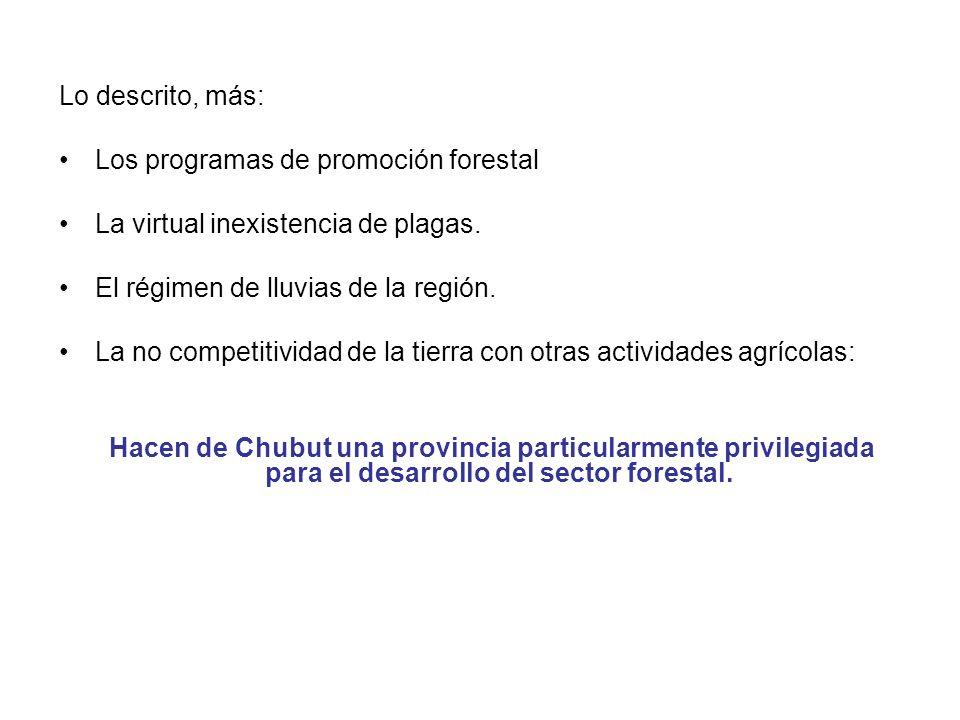 Lo descrito, más: Los programas de promoción forestal La virtual inexistencia de plagas. El régimen de lluvias de la región. La no competitividad de l