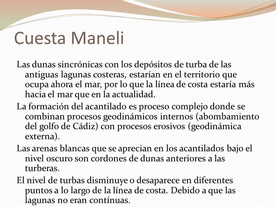 Cuesta Maneli Las dunas sincrónicas con los depósitos de turba de las antiguas lagunas costeras, estarían en el territorio que ocupa ahora el mar, por