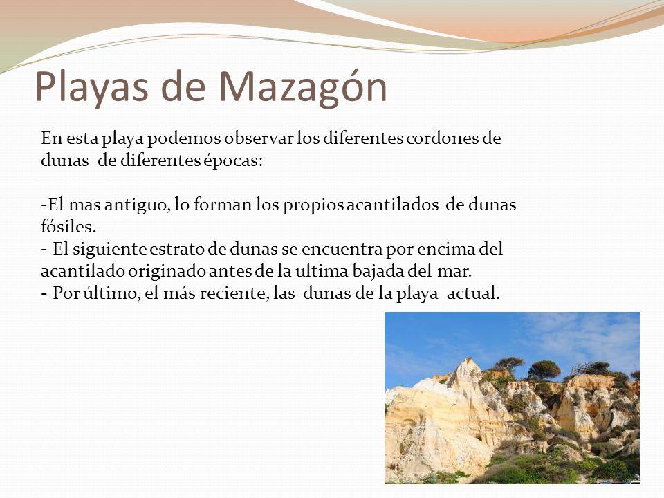 Playas de Mazagón En esta playa podemos observar los diferentes cordones de dunas de diferentes épocas: -El mas antiguo, lo forman los propios acantil