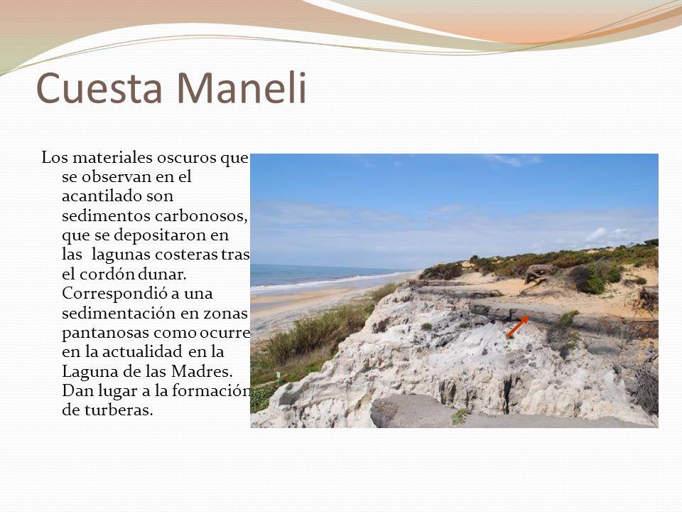 Cuesta Maneli Las dunas sincrónicas con los depósitos de turba de las antiguas lagunas costeras, estarían en el territorio que ocupa ahora el mar, por lo que la línea de costa estaría más hacia el mar que en la actualidad.