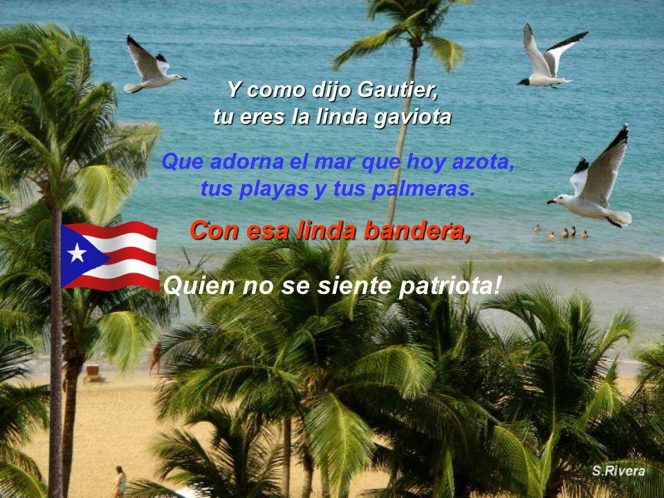 Y como dijo Gautier, tu eres la linda gaviota Con esa linda bandera, Que adorna el mar que hoy azota, tus playas y tus palmeras.
