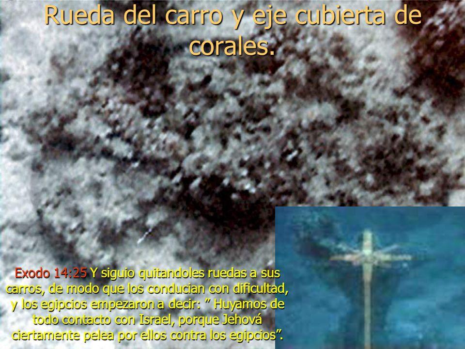 Unas incrustaciones de coral en las ruedad de carro, filmado frente a la costa de Arabia, encontrados en la tumba de Tutankamon.